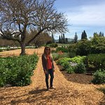 صورة فوتوغرافية لـ Kendall-Jackson Wine Estate & Gardens
