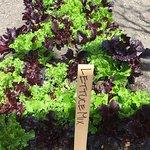 Billede af Kendall-Jackson Wine Estate & Gardens