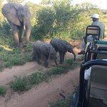 Baby elephants approach vehicle
