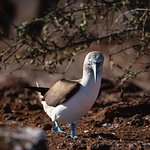 My Blue Footed Booby friend was just excited to say hi