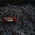 Crab meet