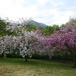 猿橋公園はお花がキレイでした。