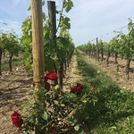 Photo of Rustic Vines