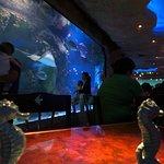 Foto di Aquarium Restaurant