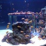 Photo of Two Oceans Aquarium