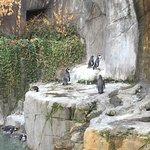 Foto de Zoológico Nacional de Chile