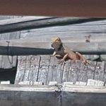 ภาพถ่ายของ สะพานซูตองเป้