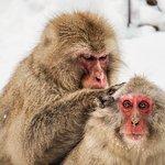 地獄谷野猿公苑の写真