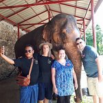霍特萨丁大象基金会照片