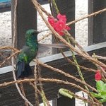 Foto de Blachi Koko Apartments Bonaire