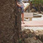 Blachi Koko Apartments Bonaire Photo