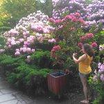 Photo of Japanese Garden - Szczytnicki Park