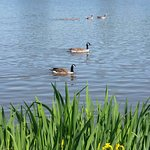 Boating Lake & Foxburrows Farm Zoo..
