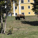 Buffalo Roam Tours - Day Tours ภาพถ่าย