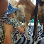 """We got to """"help"""" with the milking"""