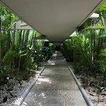 Covered, tropical walkways.