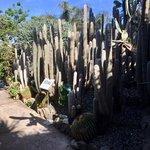 Giardini garden