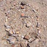 Bullfrog-Rhyolite Cemetery照片