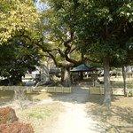 ภาพถ่ายของ สวนปราสาทโอซาก้า