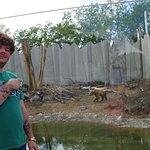 Cherkasy Zoo Φωτογραφία