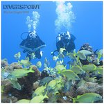 diving with diverspoint, photo made by Johan.