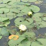 Φωτογραφία: Lake Sacajawea Park