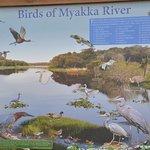 Foto de Myakka River State Park