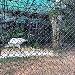 Billede af Hong Kong Zoological and Botanical Gardens