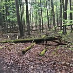 Fallen trees are throughout the forest here
