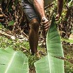 Harvesting banana leaves for our fermentation process