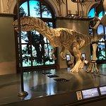 Naturhistorisches Museum Foto