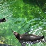 Φωτογραφία: Tiergarten Schoenbrunn - Zoo Vienna