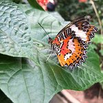 Bilde fra Kemenuh Butterfly Park