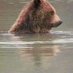 Photo de Alaska Wildlife Conservation Center