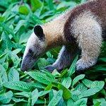 Foto de Fundación Jaguar Rescue Center