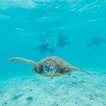 ウミガメと泳ぐシュノーケルツアー
