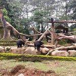 صورة فوتوغرافية لـ Indonesia Safari Park Cisarua
