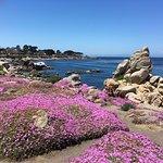 Foto Monterey Bay