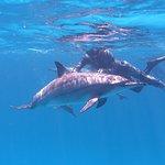 Dolphin House - Sha'ab Samadai Reef Resmi