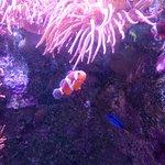 Bilde fra Aquarium La Rochelle