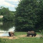 Safari de Peaugres照片