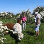 Hawthorn flower nibbling stop