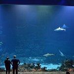 Imponerende akvarium