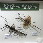 ภาพถ่ายของ Mino Park Museum of Insects