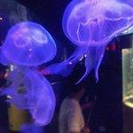ภาพถ่ายของ Aquaria KLCC