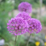 Photo of Cambridge University Botanic Garden