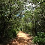 Beautiful Bushveld environment