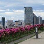 ภาพถ่ายของ Aobayama Park