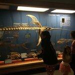 Zdjęcie Muzeum Historii Naturalnej w Waszyngtonie
