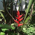 Photo of Kot Man-Ya Exotic Flower Garden